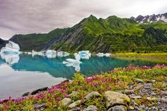 seward alaska summer - Google Search