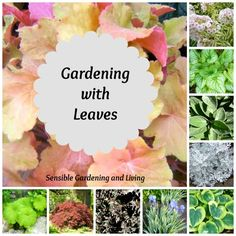 When picking plants for your garden - don't forget the leaves! Variegated plants, brightly-hued leaves, and textured leaves can add interest to your garden even when plants aren't blooming. Gardening Blog, Variegated Plants, Garden Plants, Garden Inspiration, Plants, Garden Site, Foliage Plants, Vertical Garden Plants, Leaves