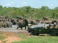 safari at Kruger National Park, South Africa Pretoria, Kruger National Park, National Parks, South Africa Safari, Safari Holidays, Africa Destinations, Holiday Destinations, Wildlife Safari, Out Of Africa