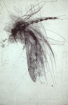 Lanfranco Quadrio(Italian, b.1966) | Dragonfly with large wing, 1997 | engraving