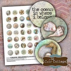 Hey, I found this really awesome Etsy listing at https://www.etsy.com/listing/122852541/sea-shell-digital-collage-sheet-seashell