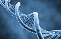 DNA, epigenetics, and stress