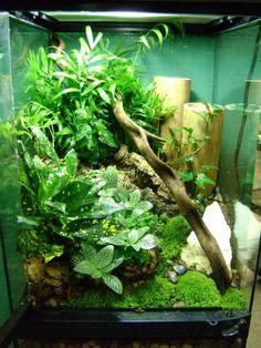 Planted vivarium