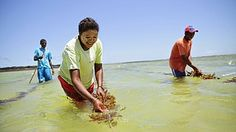A woman cultivates seaweed off the coast of Madagascar to counter overfishing. She's working with Blue Ventures, a business that supports its conservation projects by giving eco-tours.