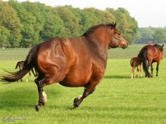 Photoshopped - Photo Effects Contest   http://www.worth1000.com/entries/543878/fat-horse