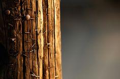 telephone pole (CC BY 2.0)