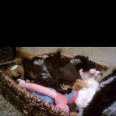 Hide-n-Seek in the toy box...Crested love