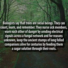 It's biology~~~~They have been around a lot longer than we care to think about....They have no legs, eyes, or even an organ that we could call a brain, but we do know that everything evolves so it is not beyond reason that they as a species are too. Yet from the look of them they haven't changed all that much, 100 million years ago we would still recognize a tree as a tree. So I ask you, what are they evolving if what we see has not really changed? ~~Amergin