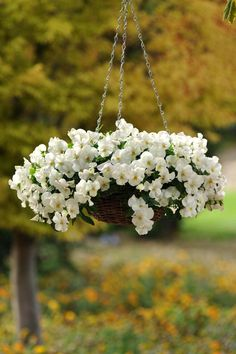 Welcome to Ideas of Sweetly Simple Woven Flower Basket article. In this post, you'll enjoy a picture of Sweetly Simple Woven Flower Basket . Hanging Plants Outdoor, Outdoor Planters, Hanging Planters, Diy Hanging, Garden Basket, Pot Jardin, Hanging Flower Baskets, Plant Design, Pansies