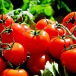 Growing tomato plants from seeds is not that difficult and it is extremely rewarding. Phenomenal Growing Tomatoes from Seeds Ideas. Vegetable Planting Guide, Planting Vegetables, Companion Planting, Organic Vegetables, Fruits And Vegetables, Vegetable Garden, Growing Tomatoes From Seed, Growing Tomato Plants, Grow Tomatoes