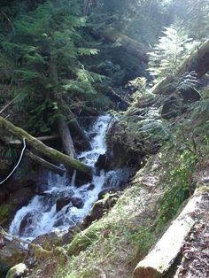 Copper Creek Trail in Olympic National Forest.