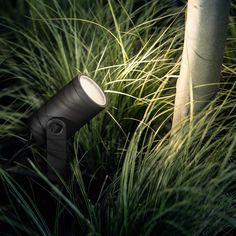 Plant Lighting, Outdoor Lighting, Landscape Lighting Design, Led Spots, Internal Courtyard, Philips Hue, Starter Set, Outdoor Landscaping, Exterior Lighting