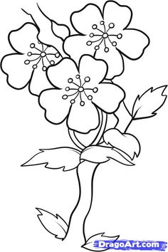 Easy to Draw Cherry Blossoms | how to draw blossoms step 7