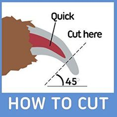 How To Cut Your Dog's Nails