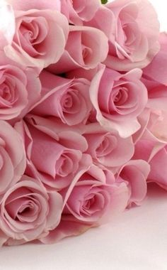 Pink roses tips. The greater organic gardening tips you may pick-up, the simpler gardening will ultimately become to suit your needs. The guidelines here might help. Love Rose, My Flower, Pretty Flowers, Pretty In Pink, Perfect Pink, Pink Roses, Pink Flowers, Couleur Rose Pastel, Pastel Pink