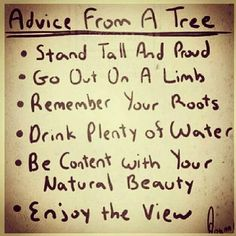 Take advice from a tree