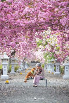 Japanese photographer Yasuto took a series of heartwarming and wholesome photos of his grandmother and her dog, a Shiba Inu. Shiba Inu, Japanese Dog Breeds, Japanese Dogs, Pictures Of You, Best Funny Pictures, Beautiful Pictures, Portraits Illustrés, Album Photo, Natural Phenomena