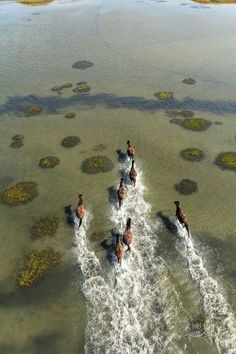 Horses runnin in water