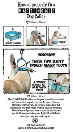 How to Fit a Martingale Collar-- a great tutorial, but I'm still not sure if I would use one.  E. uses something similar for his herding dog with great results, but I'm not sure if those great results actually hurt the dog or make him afraid of us. :( Need to do more research.