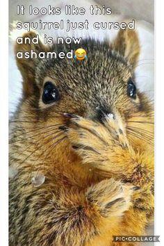Oh no. I just swore. IMSOASHAMED!!!!