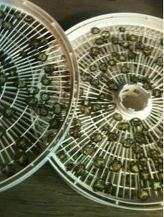 5 Steps to Dehydrating Jalapeno Peppers