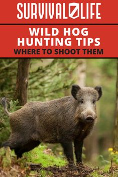 🏹🐖🐗 If you're fond of hunting deer, you should already know where to shoot them–and that's behind the shoulder. 😲Here's wild hog hunting tips to know pig anatomy for a perfect shot placement. Wild Boar Hunting, Quail Hunting, Deer Hunting Tips, Turkey Hunting, Hunting Dogs, Coyote Hunting, Alaska Hunting, Squirrel Hunting, Hunting Stuff