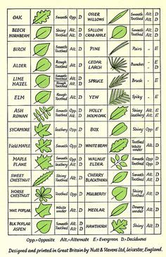 leaf types
