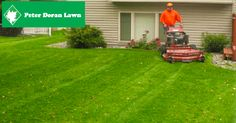 Peter Doran Lawn & Landscaping has been providing lawn care services throughout Minneapolis for over 20 years. Lawn And Landscape, Local Seo, Lawn Care, Outdoor Power Equipment, Google Analytics, Design, Lawn Maintenance, Garden Tools