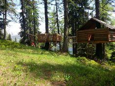 Ferien im Baumhaus unter den Lärchen der Schweiz. Trunks, Plants, Tree Houses, Switzerland, Drift Wood, Planters, Plant, Planting