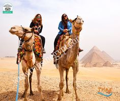 Enjoy an exciting trip for horseback & Camels riding, and enter the Great Pyramid to discover the rooms inside it. Reservation@tripsinegypt.com Whatsapp:+201069408877 #TripsInEgypt #EgyptDayTours #CairoDayTours #HurghadaExcursions #EgyptTours  #EgyptTrips #CairoTours #CairoTrips #HurghadaToCairo #HurghadaTours #HurghadaTrips  #Travels #Travel #Holidays #Holiday #Vacations #Vacation  #GizaPyramids #TheSphinx #VallyTemple #TheEgyptianMuseum #thisisegypt
