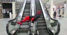 Cheezburger celebrities deadpool mindwarp escalator