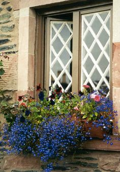 White lattice with blue flowers...