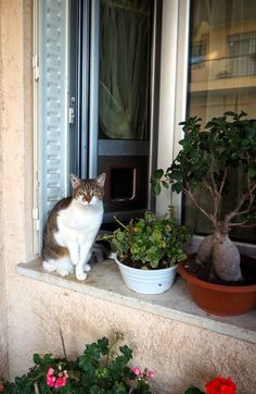 Meet the resident cat from Les pins d'Alep in Cannes, France