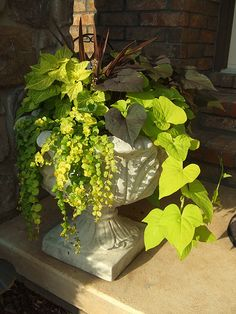 Sweet Potato Vine Container (looking better) by lil_sara7, via Flickr