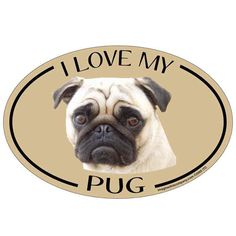 Bumper Sticker Decal Oval Dog Breed Picture Car Magnet I Love My Chiweenie