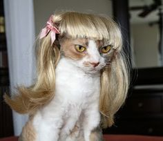 Omg I am dying. Cats with wigs--- too funny!