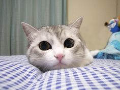 萌! #cat