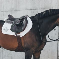 Aztec Diamond Equestrian