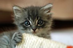 kitten- please sign petition to prevent kittens being sold as bait for dogfighting