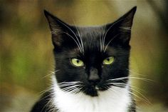 black and white cats -
