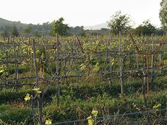 A Year in an Indian vineyard – Sula Vineyards, Nashik | Sommelier India