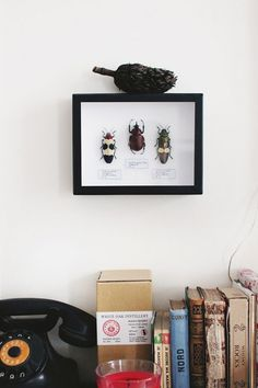 Design Sponge/ The insects are from les Mauvaises Graines, the pod is a mysterious fruit brought back from Portugal, the telephone is vintage, the whiskey is Japanese, and the old books are all secondhand trades.