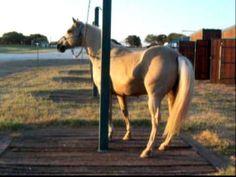 Teaching Horse Manners Using Natural Horsemanship