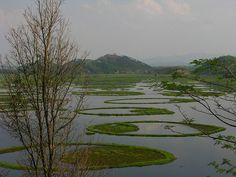 Keibul Lamjao National Park - Manipur