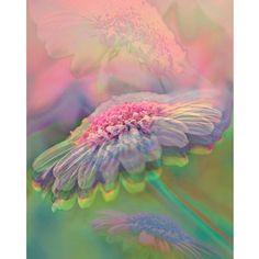Spring daisy pastel photomontage digital art print by VoogsArt