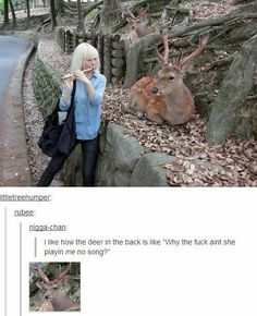 Why is she playing music to a deer  funny pics, funny gifs, funny videos, funny memes, funny jokes. LOL Pics app is for iOS, Android, iPhone, iPod, iPad, Tablet
