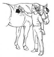Luxury Horse Jumping Coloring Pages 97 Jumping horse coloring page