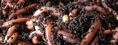 Обогатить почву! Сталкиваясь с ситуацией бедной земли или глинисто-песчанного грунта на посадочных участках - http://nachastroika.ru/stati-stroitelstvo/grunt-bedni.html