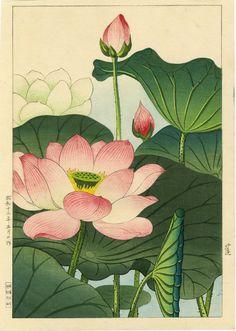 Nishimura Hodo Japanese Woodblock Print Lotus Blossoms 1930s | eBay