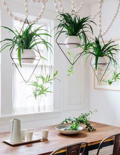 Chlorophytum comosum: 6 deco ideas for THE easy indoor plant! Hanging Plants Outdoor, Diy Hanging, Hanging Planters, Air Plants, Potted Plants, Indoor Plants, Indoor Gardening, House Plants Decor, Plant Decor